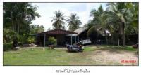 ที่ดินพร้อมสิ่งปลูกสร้างหลุดจำนอง ธ.ธนาคารกรุงไทย ม่วงงาม สิงหนคร สงขลา
